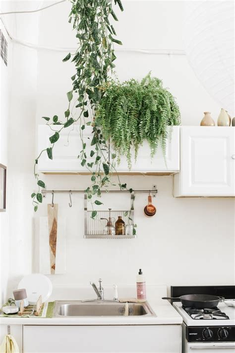 plants in the kitchen 10 tricks to make a small kitchen look bigger ao life