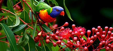 Colorful Tropical Plants - tropical north queensland holidays packages and deals 2017 flight centre nz