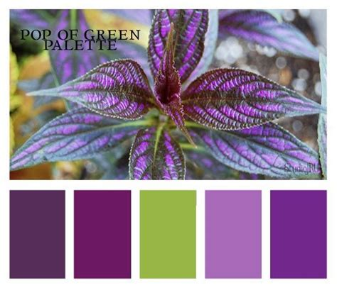 purple color combination 94 best quot purple green quot together images on pinterest