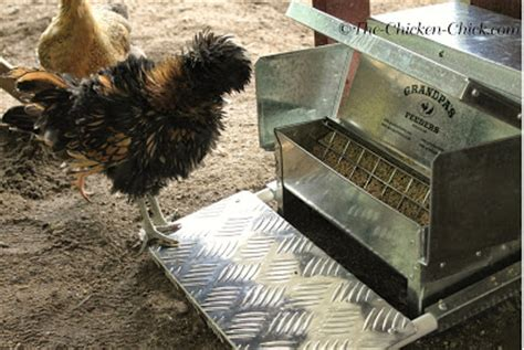 money with chickens how to make up to 12k a year with just 15 chickens books the chicken 174 s feeders review save money