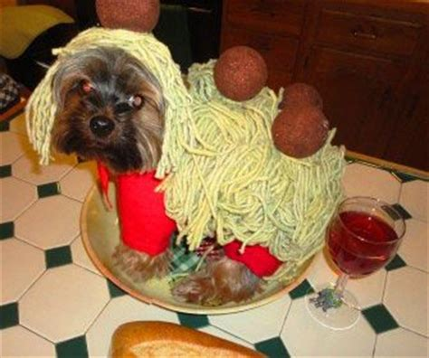 spaghetti and dogs spaghetti and meatball costume search scout the most adorable cavapoo