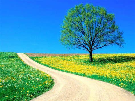 la camino tu camino espiritual vida y felicidad