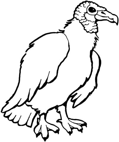 turkey vulture coloring page collections