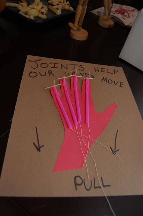 How To Make String On Paper - joint tendon model cardboard paper straws need