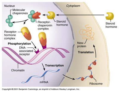 bio cell cell interactions scientific american blog