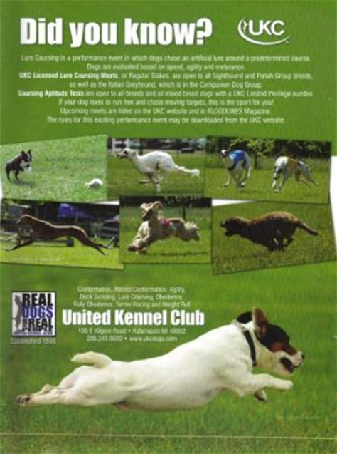 ukc dogs united kennel club s 2014 premier show