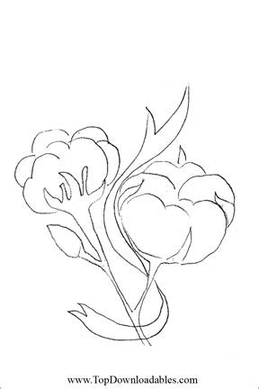 Pin Cotton Coloring Pages On Pinterest Cotton Coloring Pages