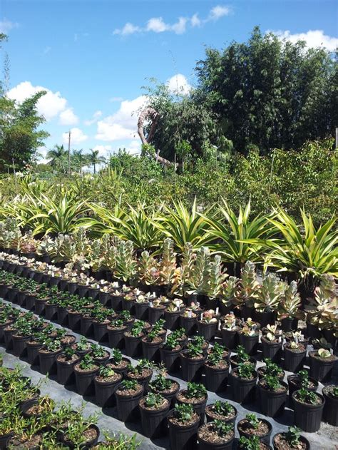 17 best images about wholesale plant nursery supplies and