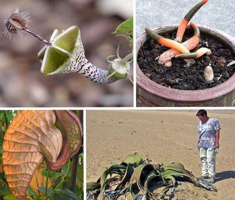 rare exotic amazing plant species webecoist
