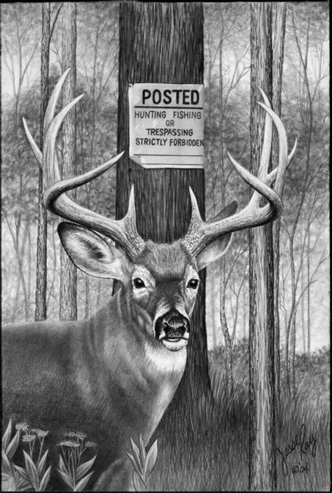 Ebay Whitetail Deer Buck Pencil Drawing by NC Artist Whitetail Buck Drawings