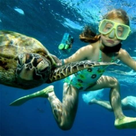 glass bottom boat tours townsville visit cairns moore reef pontoon cruise
