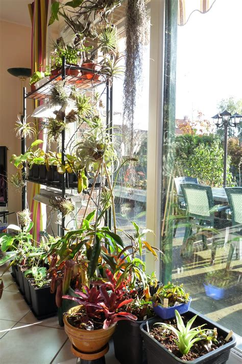 how to increase humidity in a grow room growing nepenthes in low humidity a garden s chronicle