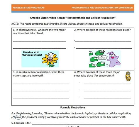 Cell Processes Worksheet by Worksheets Comparing Photosynthesis And Cellular