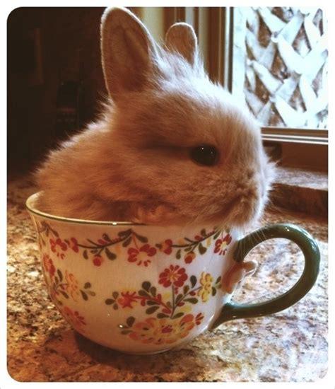 Kaos Bunny And Cup Of Tea tea cup bunny bunnies i complete