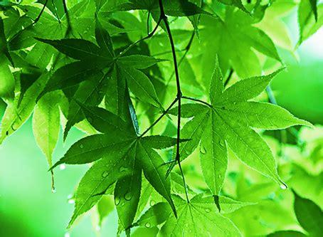 bid significato verde significato simbologia e propriet 224 colore verde