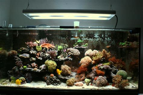 welche beleuchtung aquarium pretty aquarium beleuchtung t5 images gt gt aquarium