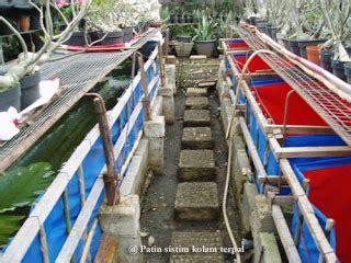 Jual Bibit Ikan Nila Cirebon pusat nila cirebon macam macam desain kolam terpal