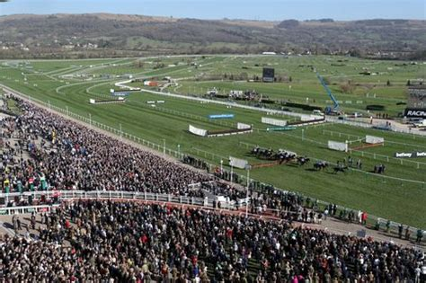 Cheltenham Gold Cup Sweepstake - cheltenham ladies day 2016 the best and the worst outfits of the day in pictures
