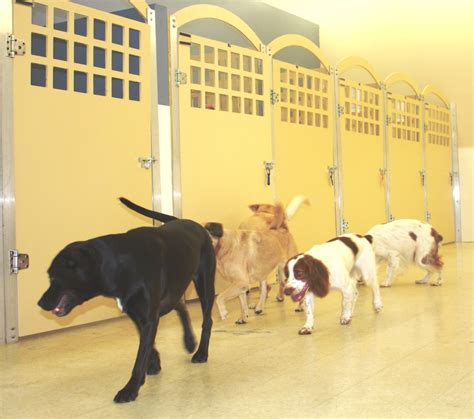 When Do Search For Pet Boarding Luxury Boarding At The Vet Happy Hound Resorts