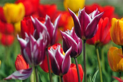 bunga tercantik di dunia bunga tercantik di dunia related keywords bunga