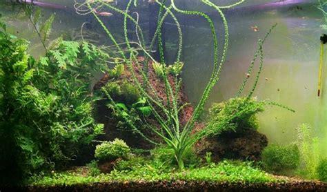penyuluhan perikanan jenis tanaman aquascape  akuarium