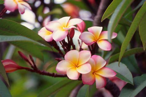 popular spring flowers summer flower best summer flowers