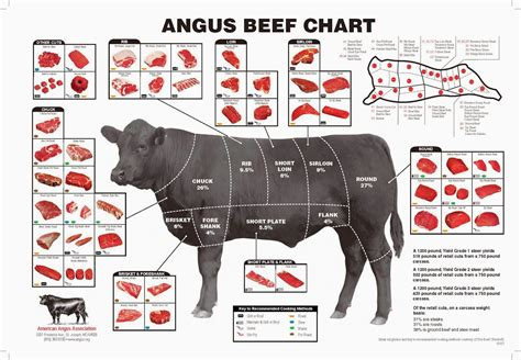 cow cuts diagram the american cowboy chronicles cattle diagrams retail