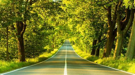 background jalan pemandangan jalan dan pohon hijau pernik dunia