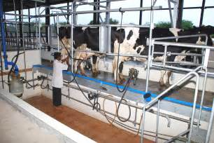 Small Animal Barn Dairy Farm Barn And Layout Designs Animals पश Aaqua