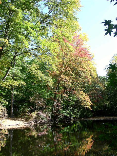 the secret pond the secret pond stock 15 by fairiegoodmother on deviantart