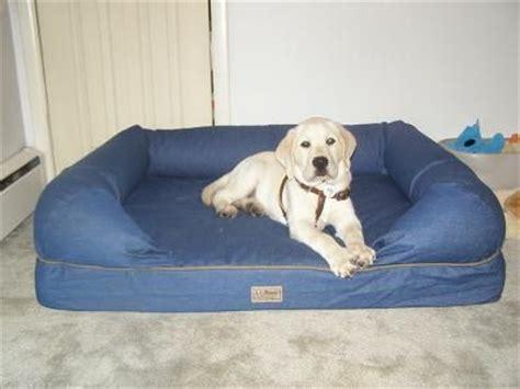 therapeutic dog couch therapeutic dog couch