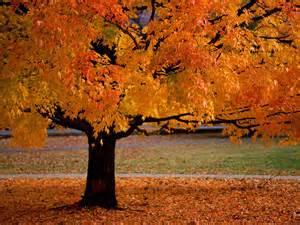 fonds d 233 cran foret automne 2015 maximumwallhd