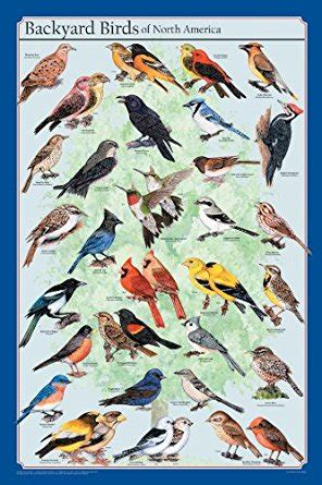 frey scientific backyard birds of north america poster 36