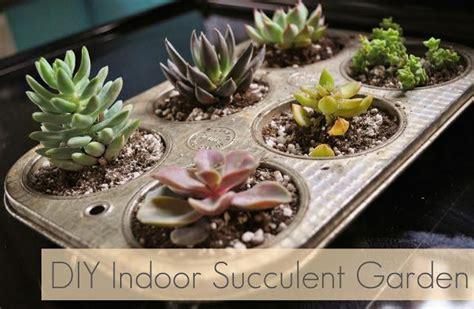 Indoor Succulent Garden Ideas Succulent Garden Diy Indoor Succulent Garden Cotcozy