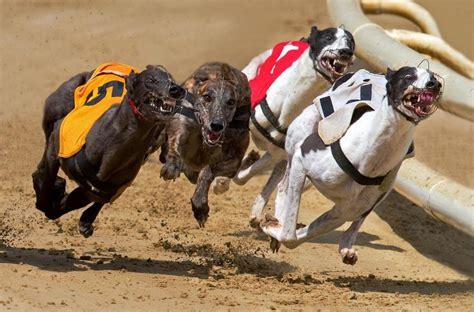 puppy race racing pixdaus