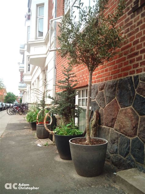 Around Tree Planter by Flower Pots And Planters Around The Streets Award