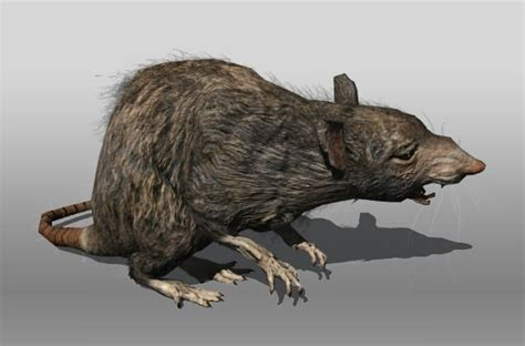 rat animal  model game ready rigged max obj ds fbx