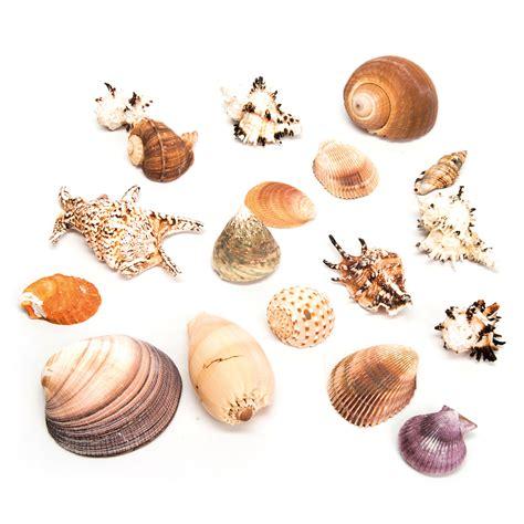 Decorative Filing Boxes Buy Basket Of Sea Shells Tts
