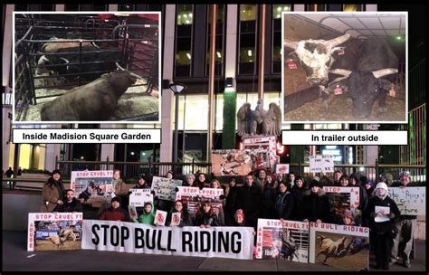 Garden City Vet Ny Bull Fans Clash With Animal Rights Protesters In