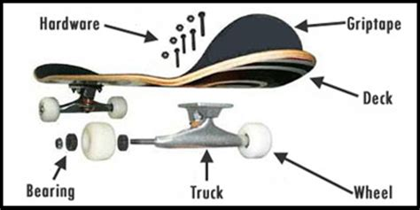 longboard parts diagram essential guide to skateboards for skateboards