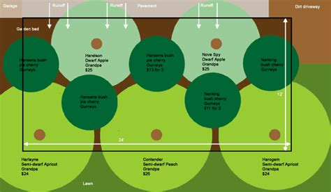 Fruit Tree Guild Plans Fruit Trees Orchards And Plants Fruit Tree Garden Layout