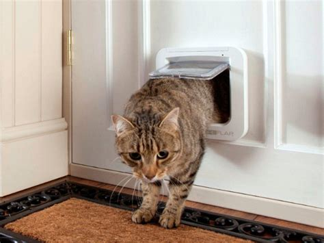cat door make your cat feel at home with the sureflap microchip cat