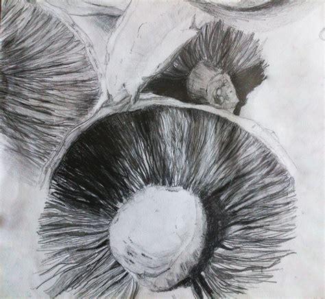 Portobello Drawing portobello mushrooms pencil drawings by ladyimperfectus on