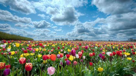 blooms hd wallpapers 25 free hd flowers wallpapers