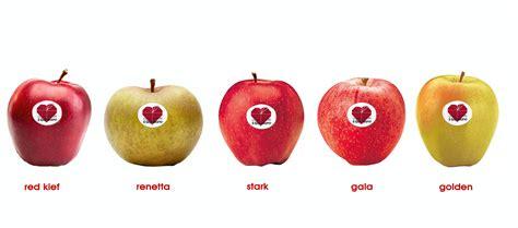 il gabbiano cooperativa sociale cooperativa sociale quot il gabbiano quot le mele
