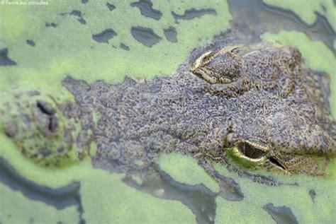 la ferme aux crocodiles de pierrelatte avignon et provence