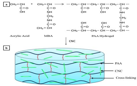 How Does Mba Cross Link Acrylamide by Nanomaterials Free Text Synthesis And Swelling