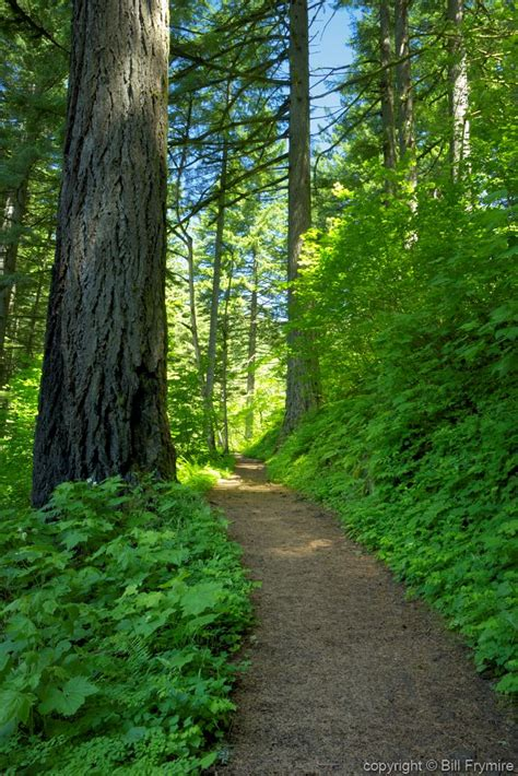 Columbia Mba Paths by Forest Walking Path Columbia River Gorge