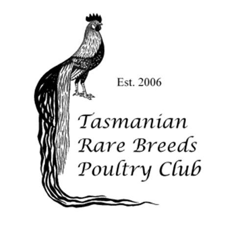 backyard poultry tasmania tasmanian rare breeds poultry club inc