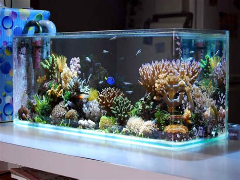 decoration saltwater aquarium design ideas unique fish